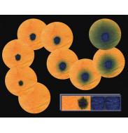 Геликобактер-тест - диагностические диски в упаковке (Helicobacter Pylori), 100 шт
